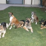 Dog Training Classes in AZ