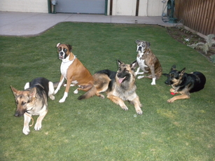 Training Class AAA Dogs